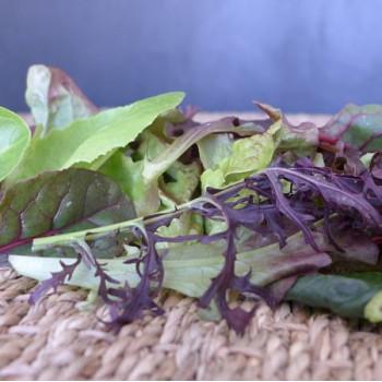 salade fraiche mesclun de salade