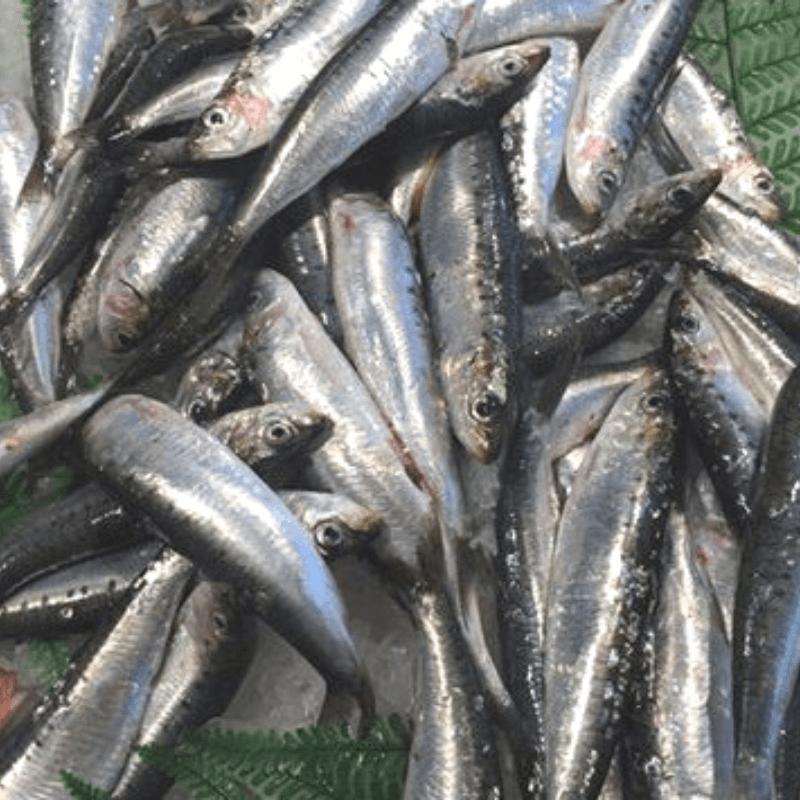 Sardines 500g