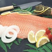 Filet de saumon entier 1,3kg