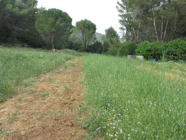 Safran de Cuges : une exploitation de safran en Provence