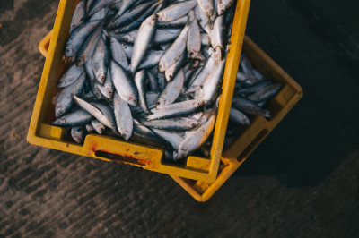 Une pêche raisonnée et durable est possible