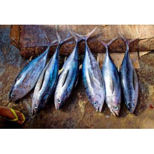 Vente en ligne de poissons fumés (Saumon fumé, St Jacques, haddock..)