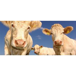 Achat en ligne viande de bœuf direct producteur
