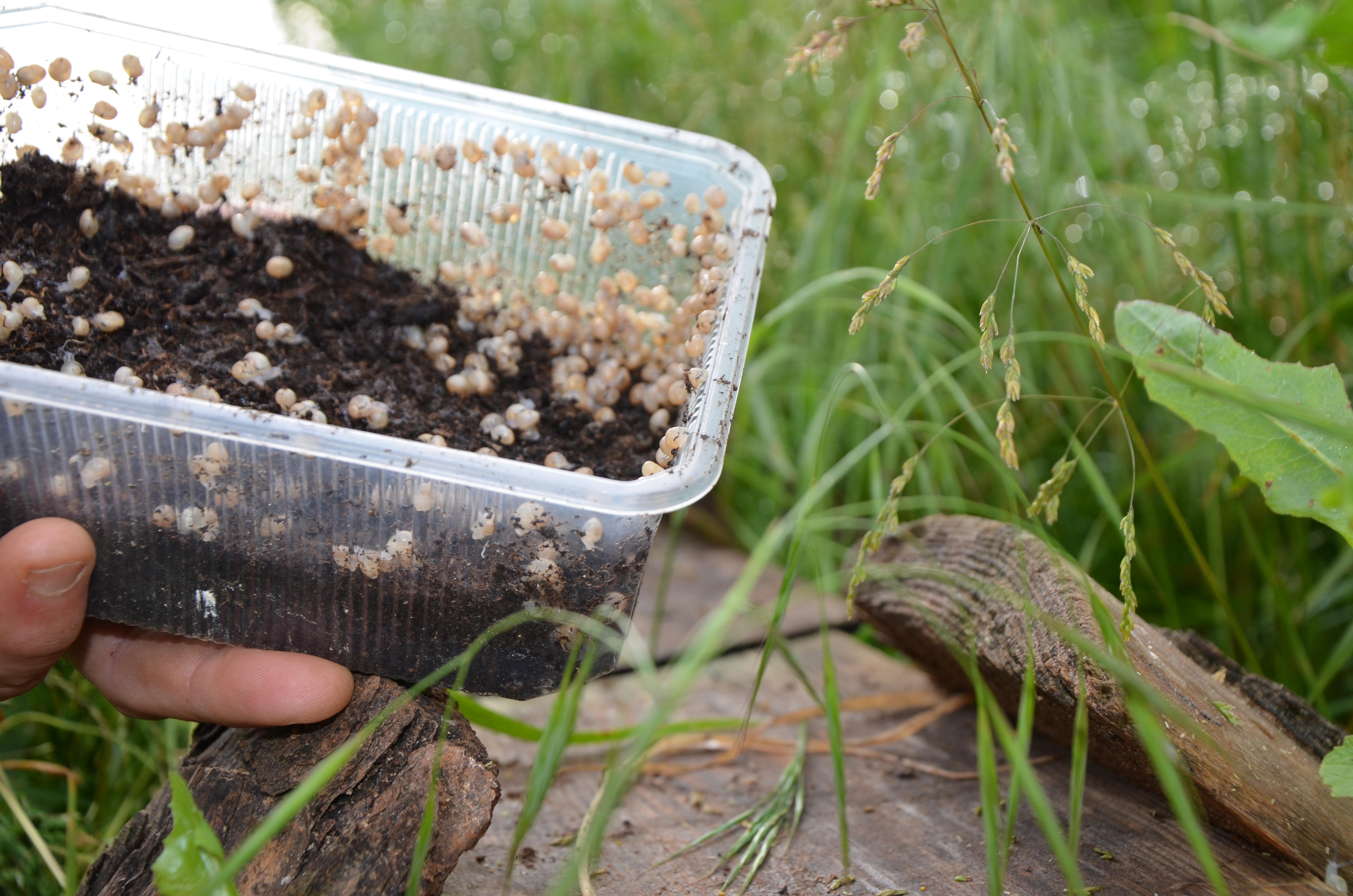 Elevage d'escargot bio Escalagaü