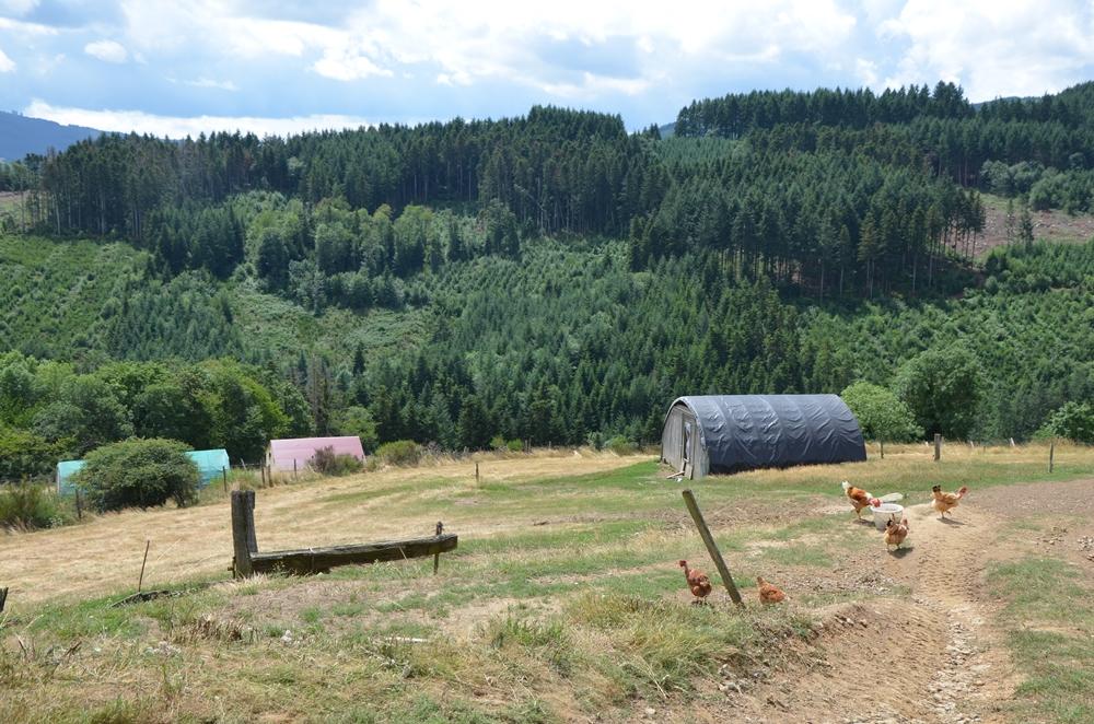 Volailles ferme pres du bois